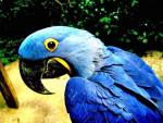 chu - Parrot (8 years)