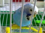 Sky - Bird (3 years)
