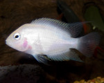 Eleanor Lou - Fish (7 months)