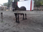 wilco - Male Horse (10 years)