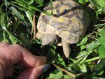 Kameko - Turtle (2 years)